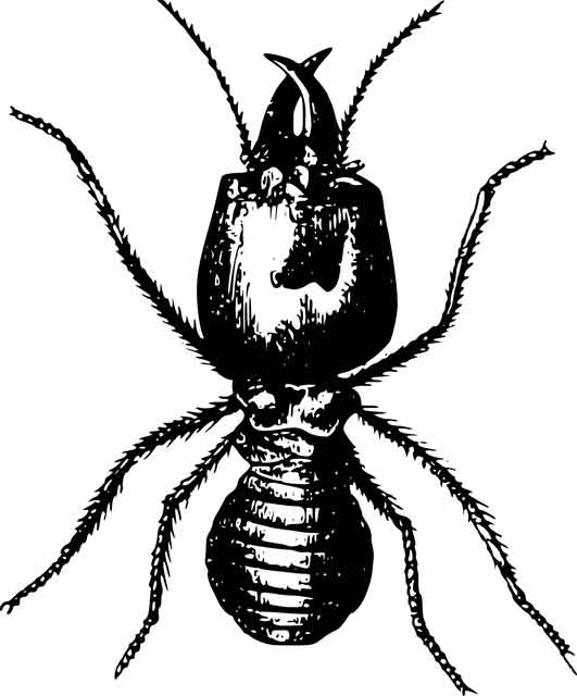 drawing of a termite